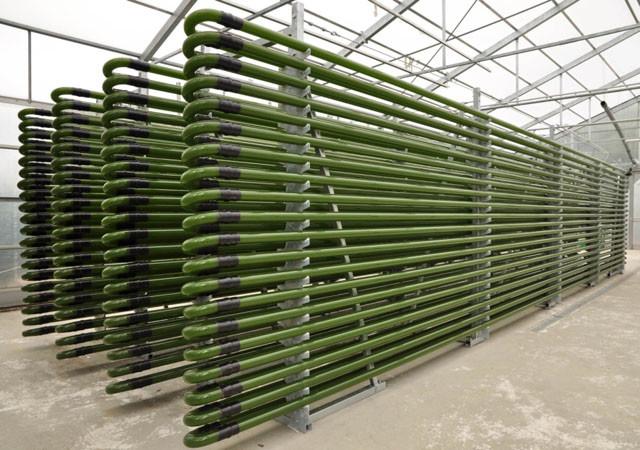 Výroba, pěstování, kultivace chlorelly