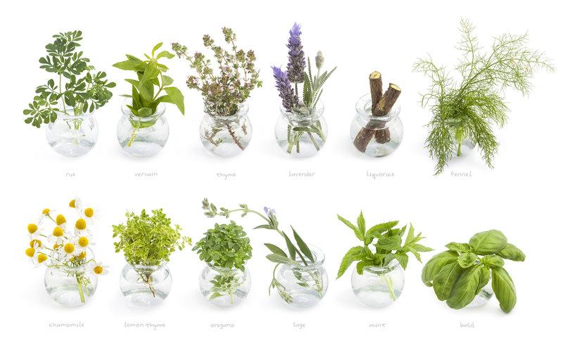 byliny pre detoxikáciu pľúc